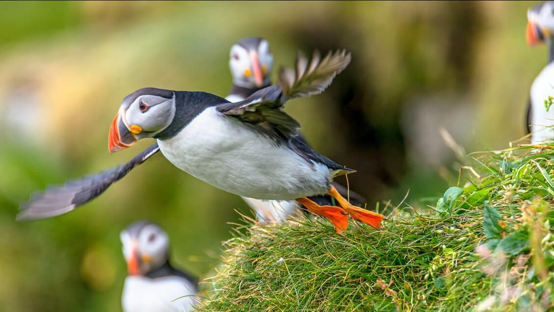 Highlights of The Faroe Islands